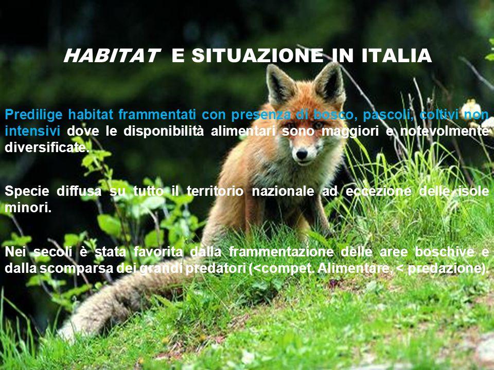 HABITAT E SITUAZIONE IN ITALIA Predilige habitat frammentati con presenza di bosco, pascoli, coltivi non intensivi dove le disponibilità alimentari so