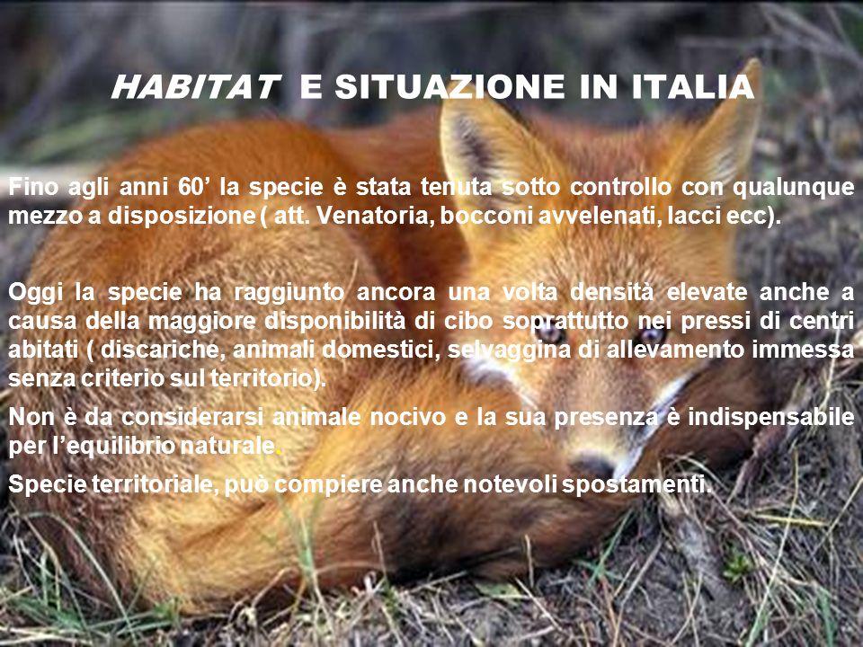 HABITAT E SITUAZIONE IN ITALIA Fino agli anni 60 la specie è stata tenuta sotto controllo con qualunque mezzo a disposizione ( att. Venatoria, bocconi