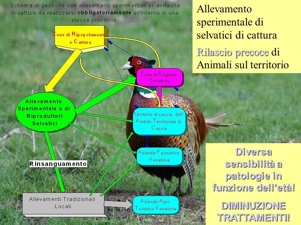 Allevamento sperimentale di selvatici di cattura Rilascio precoce Rilascio precoce di Animali sul territorio Diversa sensibilità a patologie in funzio