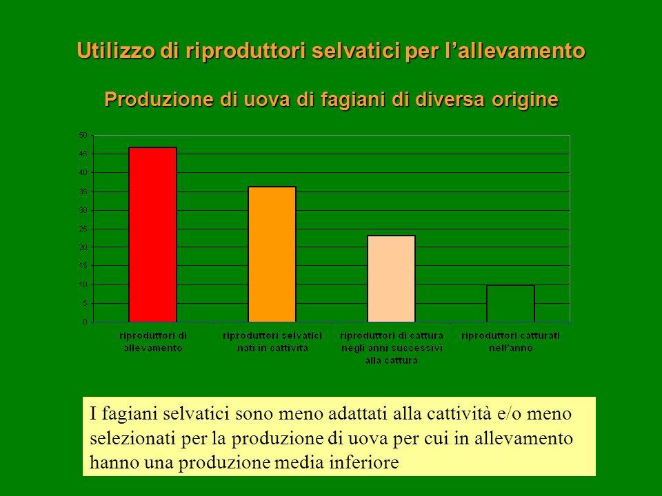 Produzione di uova di fagiani di diversa origine I fagiani selvatici sono meno adattati alla cattività e/o meno selezionati per la produzione di uova