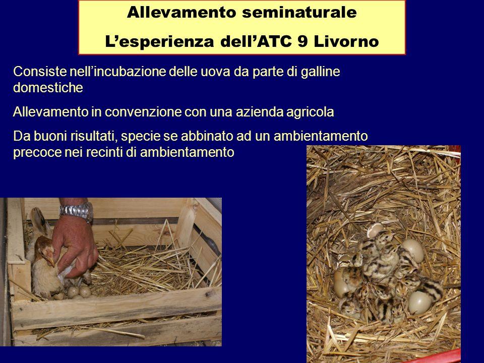 Allevamento seminaturale Lesperienza dellATC 9 Livorno Consiste nellincubazione delle uova da parte di galline domestiche Allevamento in convenzione c