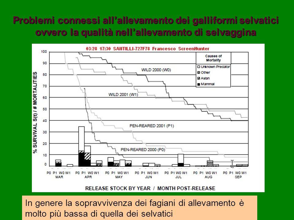 Problemi connessi allallevamento dei galliformi selvatici ovvero la qualità nellallevamento di selvaggina In genere la sopravvivenza dei fagiani di al