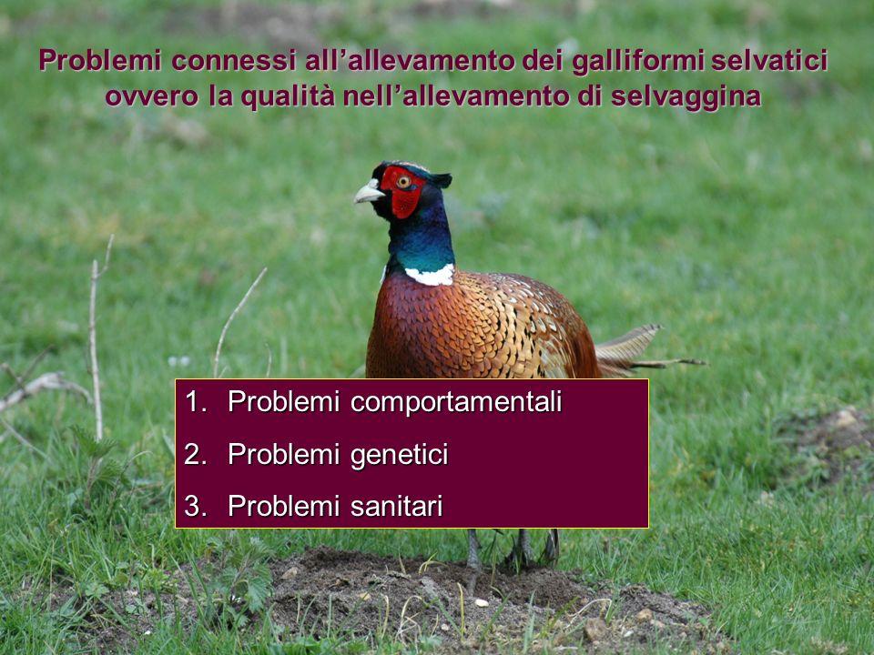 Problemi connessi allallevamento dei galliformi selvatici ovvero la qualità nellallevamento di selvaggina 1.Problemi comportamentali 2.Problemi geneti