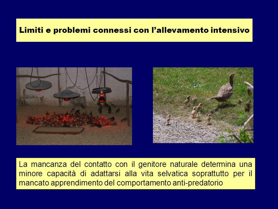 Luso dei sistemi anti-pica può condizionare il comportamento anche dopo limmissione nellambiente selvatico