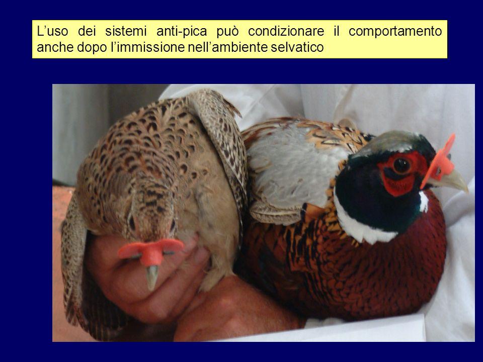 Allevamento seminaturale Lesperienza dellATC 9 Livorno Consiste nellincubazione delle uova da parte di galline domestiche Allevamento in convenzione con una azienda agricola Da buoni risultati, specie se abbinato ad un ambientamento precoce nei recinti di ambientamento