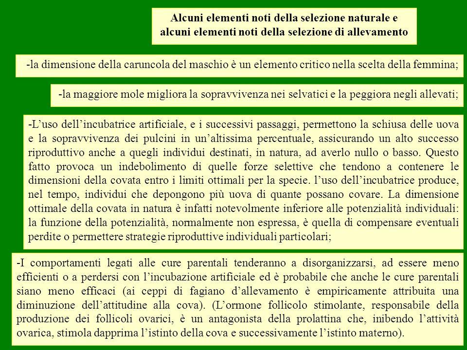 Alcuni elementi noti della selezione naturale e alcuni elementi noti della selezione di allevamento -I comportamenti legati alle cure parentali tender