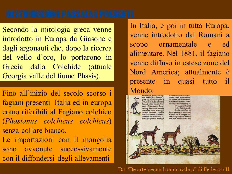 12 DISTRIBUZIONE PASSATA E PRESENTE Secondo la mitologia greca venne introdotto in Europa da Giasone e dagli argonauti che, dopo la ricerca del vello