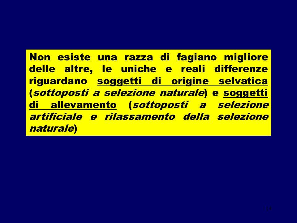 14 Non esiste una razza di fagiano migliore delle altre, le uniche e reali differenze riguardano soggetti di origine selvatica (sottoposti a selezione