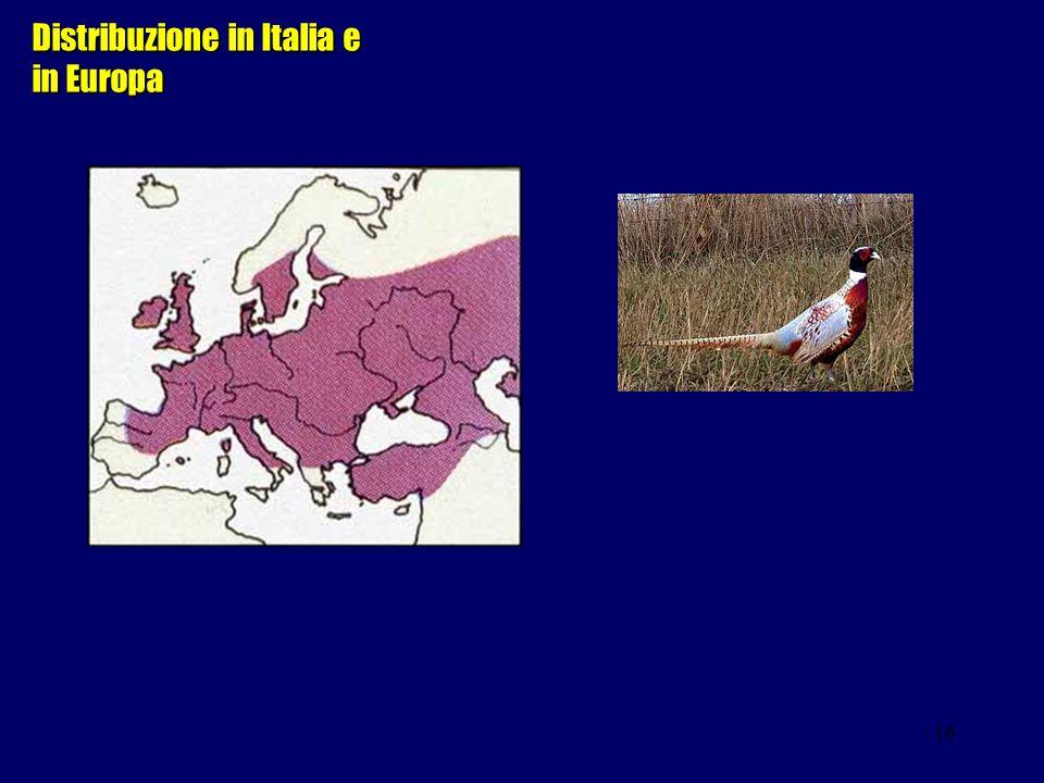 16 Distribuzione in Italia e in Europa