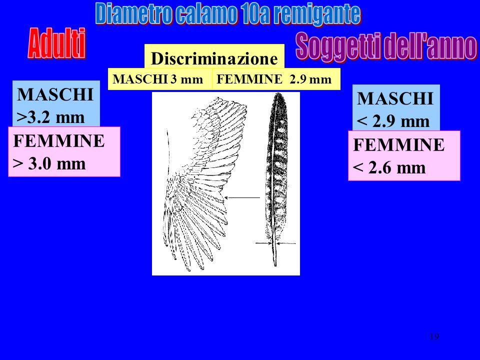 19 MASCHI >3.2 mm Discriminazione FEMMINE > 3.0 mm MASCHI < 2.9 mm FEMMINE < 2.6 mm MASCHI 3 mmFEMMINE 2.9 mm