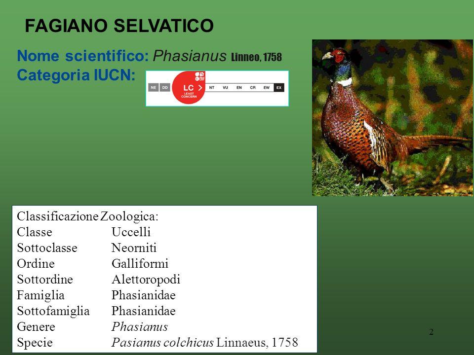 2 Nome scientifico: Phasianus Linneo, 1758 Categoria IUCN: FAGIANO SELVATICO Classificazione Zoologica: ClasseUccelli SottoclasseNeorniti OrdineGalliformi SottordineAlettoropodi FamigliaPhasianidae SottofamigliaPhasianidae GenerePhasianus SpeciePasianus colchicus Linnaeus, 1758