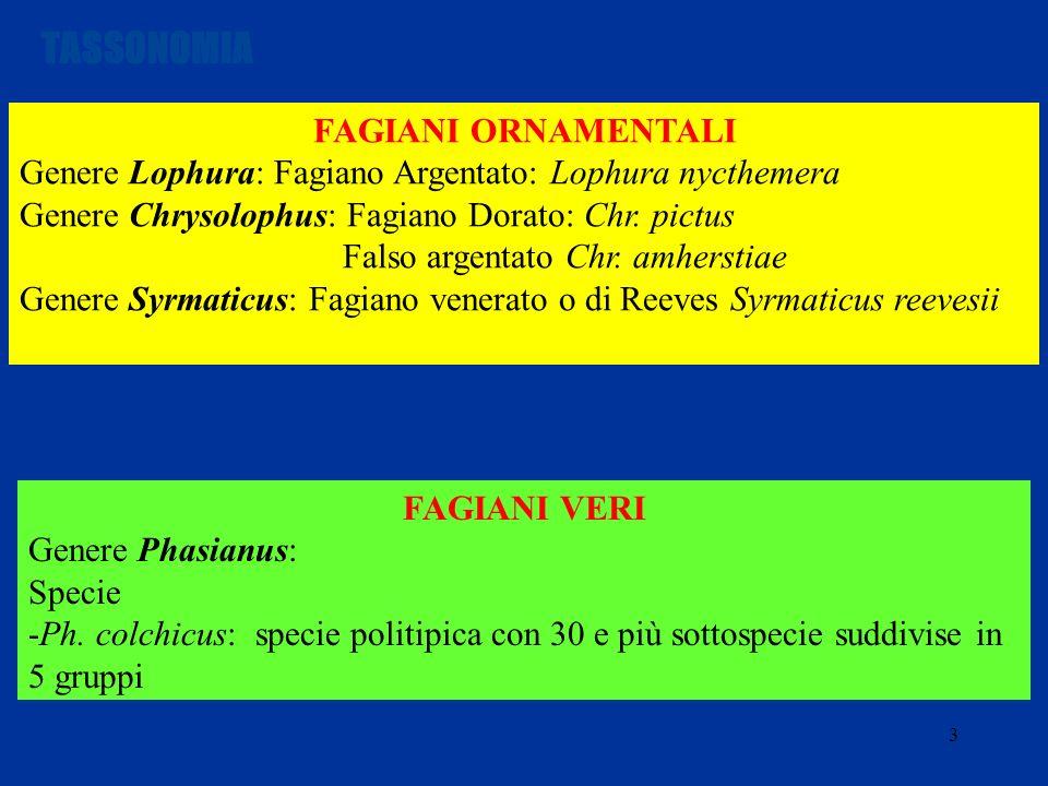3 FAGIANI ORNAMENTALI Genere Lophura: Fagiano Argentato: Lophura nycthemera Genere Chrysolophus: Fagiano Dorato: Chr. pictus Falso argentato Chr. amhe