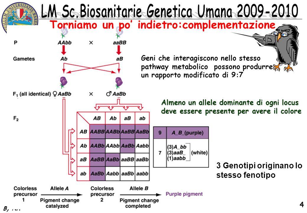 By NA 5 Torniamo un po indietro:epistasi recessiva Geni che interagiscono nello stesso pathway metabolico possono produrre un rapporto modificato di 9:3:4 w + _ m + _ 9 w + _ mm_ 3 ww m + _ 3 ww mm 1 9 : 3 : 4