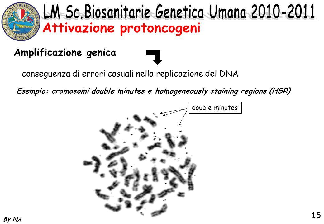 By NA 15 Attivazione protoncogeni Amplificazione genica conseguenza di errori casuali nella replicazione del DNA Esempio: cromosomi double minutes e h