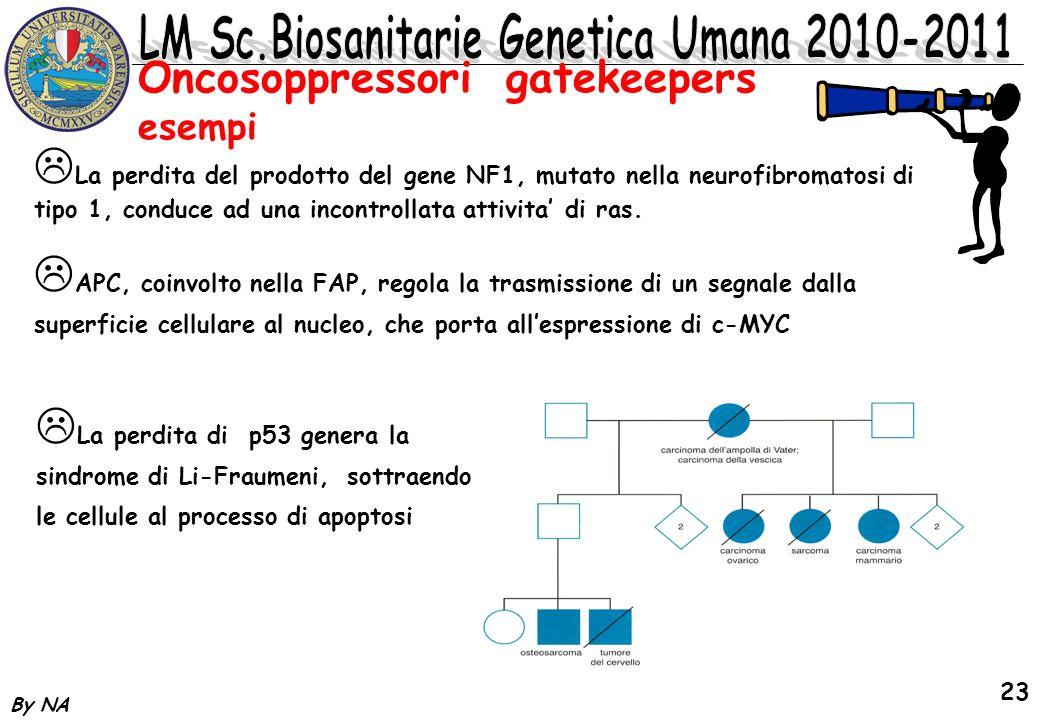 By NA 23 La perdita del prodotto del gene NF1, mutato nella neurofibromatosi di tipo 1, conduce ad una incontrollata attivita di ras. La perdita di p5