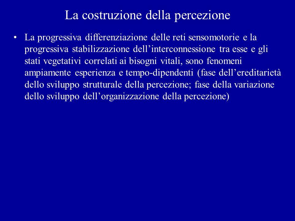 La costruzione della percezione La progressiva differenziazione delle reti sensomotorie e la progressiva stabilizzazione dellinterconnessione tra esse