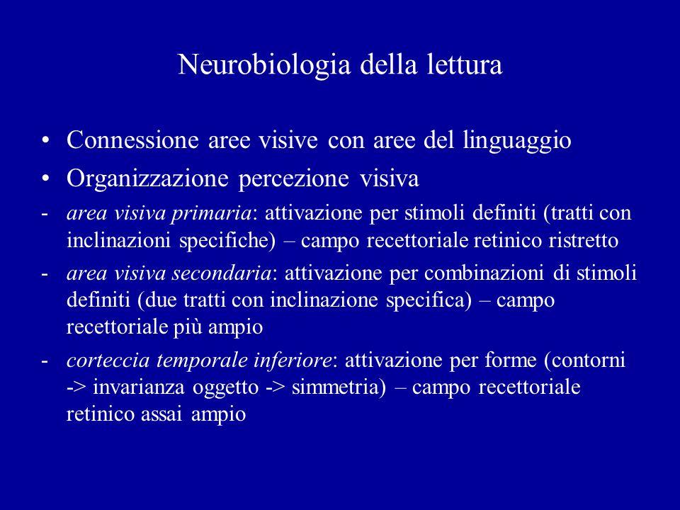 Neurobiologia della lettura Connessione aree visive con aree del linguaggio Organizzazione percezione visiva -area visiva primaria: attivazione per st