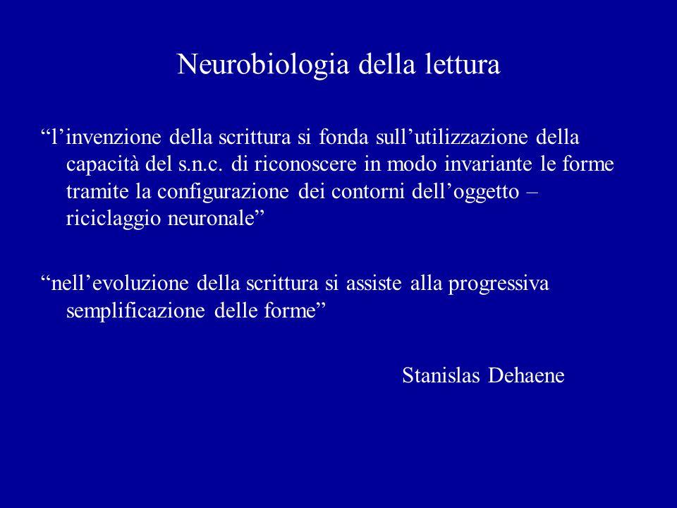 Neurobiologia della lettura linvenzione della scrittura si fonda sullutilizzazione della capacità del s.n.c. di riconoscere in modo invariante le form