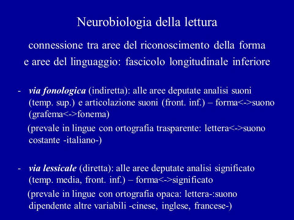 Neurobiologia della lettura connessione tra aree del riconoscimento della forma e aree del linguaggio: fascicolo longitudinale inferiore -via fonologi