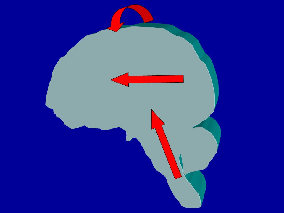 Lattenzione congiunta e lindicare fino a 9-12 mesi il bambino ha uninterazione diadica con l oggetto (cose o persone) tra i 9 e i 12 mesi compare la capacità di attuare interazioni triadiche (sé-altro-oggetto) sostenute dallattenzione congiunta sé-altro nello stesso periodo compare il gesto dell indicare (gesto ritualizzato per convenzionalizzazione tramite imitazione adulto?) sia come atto imperativo che dichiarativo lindicare è gesto proprio della specie umana (assente nellautismo)