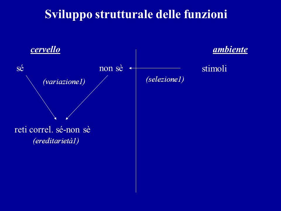 Sviluppo organizzativo delle funzioni cervello ambiente sé non sè stimoli (variazione1) (selezione1) reti correl.