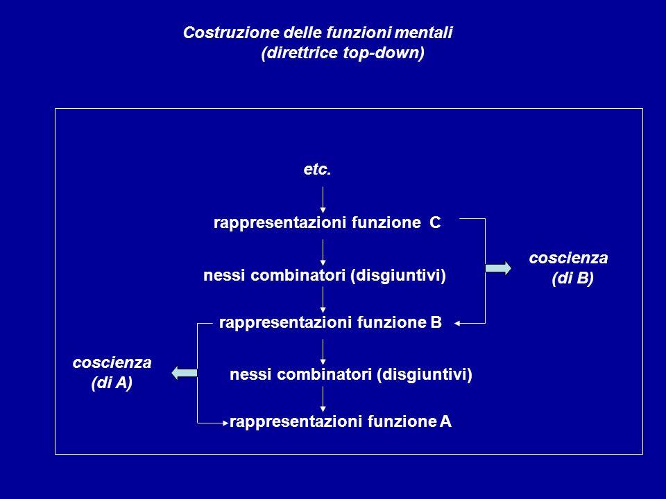 rappresentazioni funzione C Costruzione delle funzioni mentali (direttrice top-down) nessi combinatori (disgiuntivi) rappresentazioni funzione B cosci