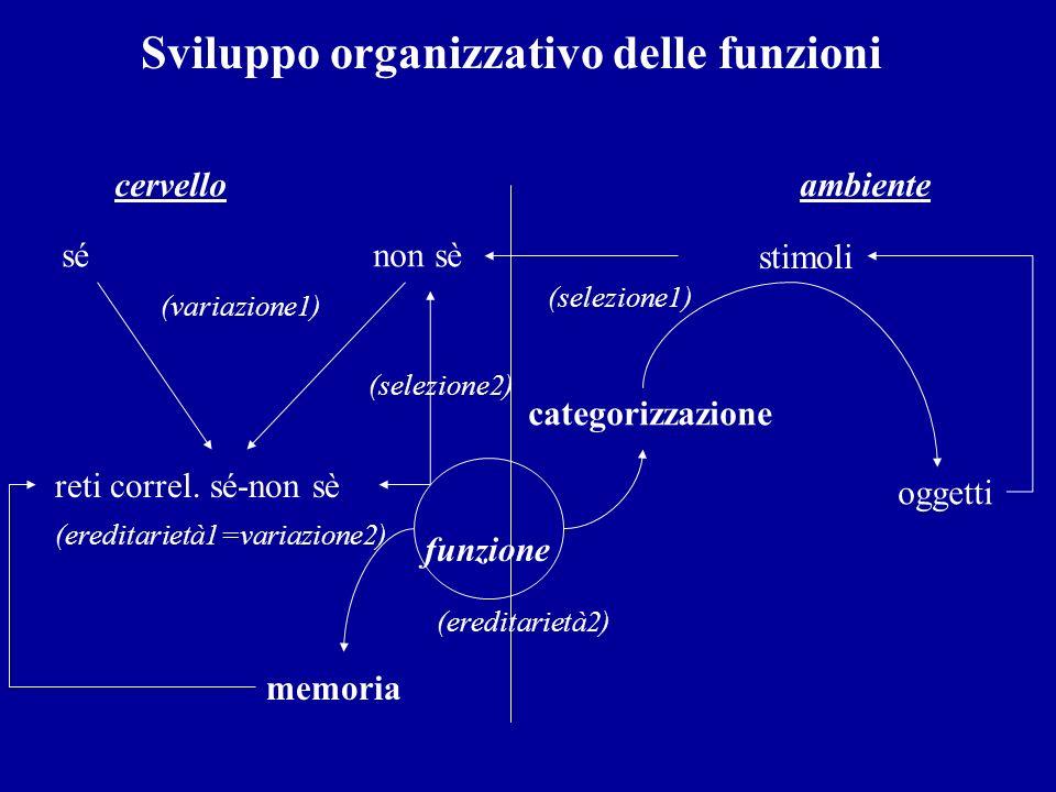 Sviluppo organizzativo delle funzioni cervello ambiente sé non sè stimoli (variazione1) (selezione1) reti correl. sé-non sè (ereditarietà1=variazione2