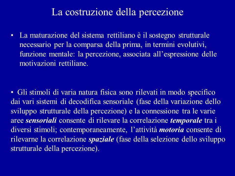 La costruzione della percezione La maturazione del sistema rettiliano è il sostegno strutturale necessario per la comparsa della prima, in termini evo