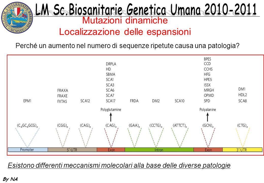 By NA Mutazioni dinamiche Classificazione molecolare Espansioni in porzioni codificanti (esoniche) del gene: Poliglutamine (Corea di Huntington, malattia di Kennedy, SCAs) Polialanine (Oloprosencefalia, sinpolidattilia, hand-foot- genital syndrome) Espansioni in porzioni non codificanti del gene: Promotore (Epilessia progressiva mioclonica) 5-UTR (Sindrome dellX-fragile, SCA12) Introne (Atassia di Friedrich, Distrofia miotonica di tipo 2) 3-UTR (Distrofia miotonica di tipo 1, SCA8)