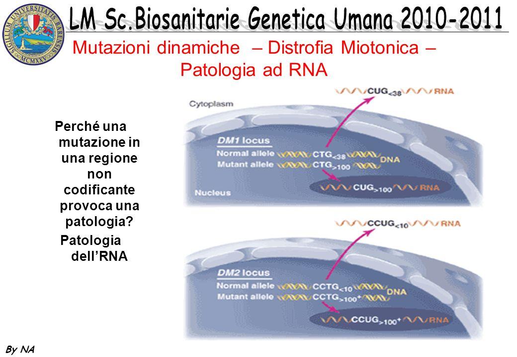 By NA Mutazioni dinamiche – Distrofia Miotonica – Patogenesi Il gene DMPK è trascritto in mRNA che deve essere traslocato dal nucleo al citoplasma per essere processato Se è presente lespansione, questa sarà trascritta in RNA (CUG).