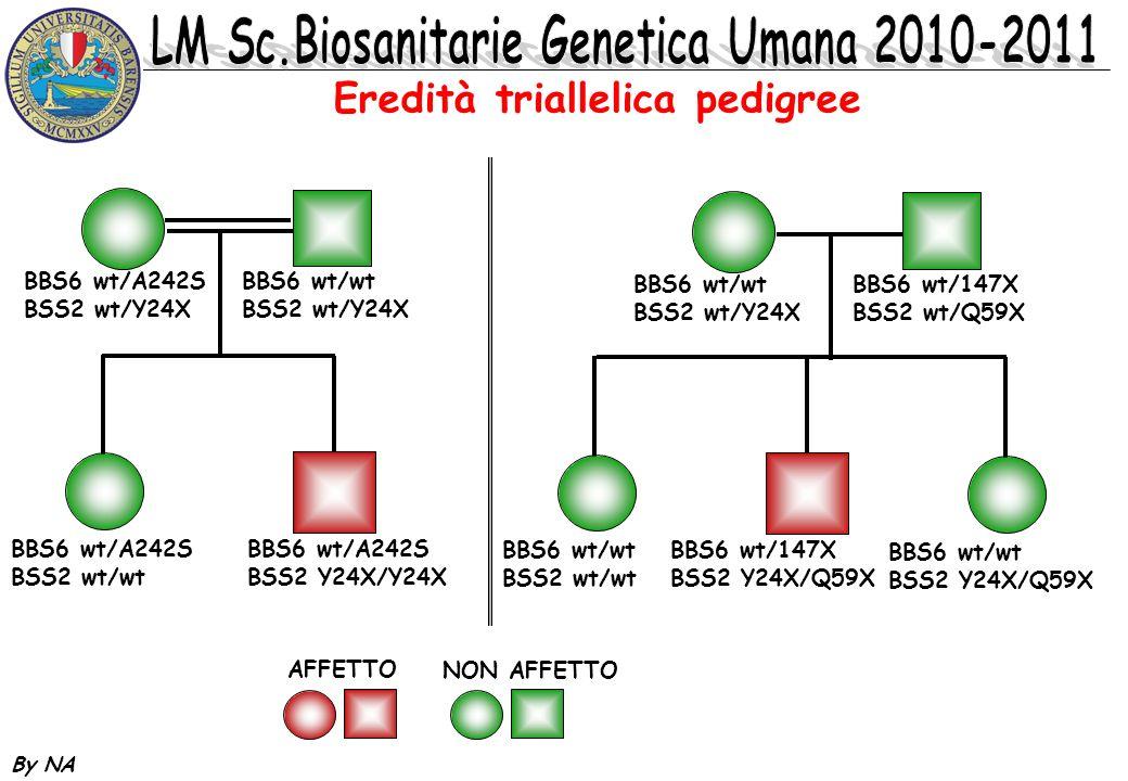 By NA MECCANISMO BI/TRIALLELICA A BB x legame meno stabile x comparsa del fenotipo assenza del fenotipo A B C x A A x A BB x A B D A B C DxDx B A B x C D D A C DxDx Funzione x