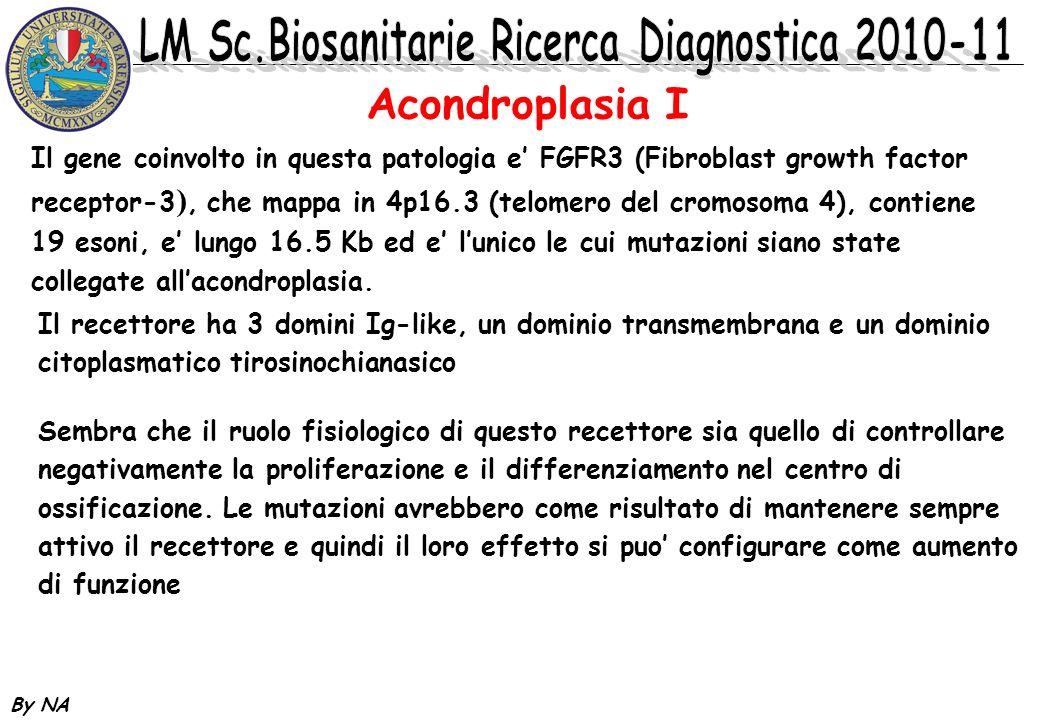 By NA Acondroplasia I Il gene coinvolto in questa patologia e FGFR3 (Fibroblast growth factor receptor-3 ), che mappa in 4p16.3 (telomero del cromosom