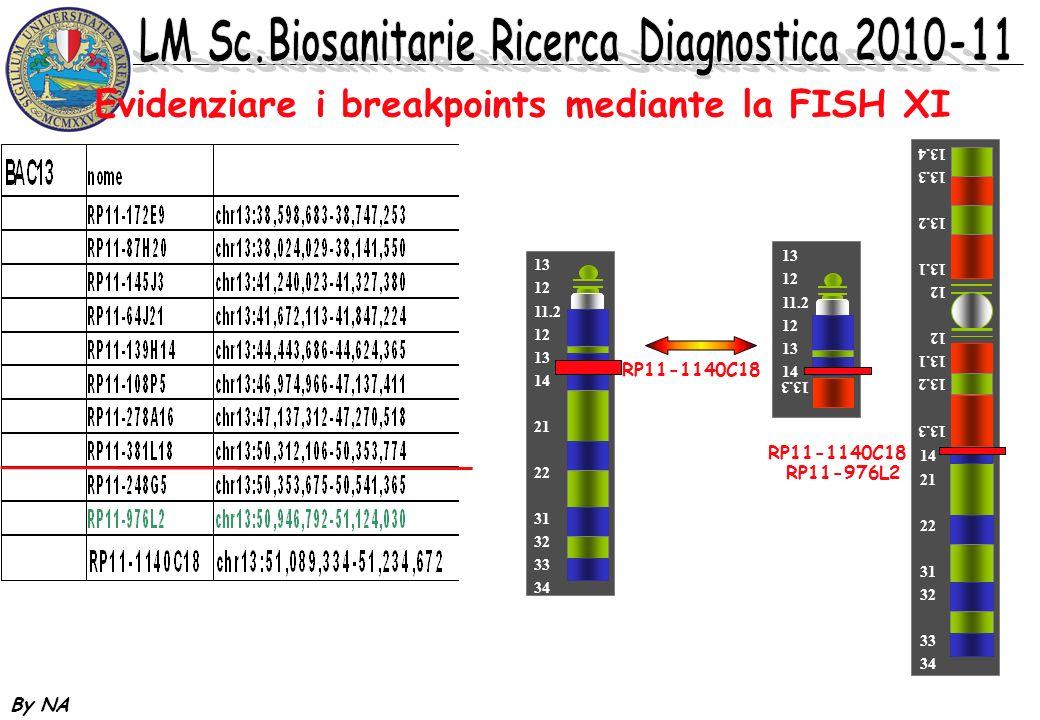 By NA Evidenziare i breakpoints mediante la FISH XI 13 12 11.2 12 13 14 21 22 31 32 33 34 13.3 13.2 13.1 12 13.1 13.2 13.3 13.4 19 14 21 22 31 32 33 3