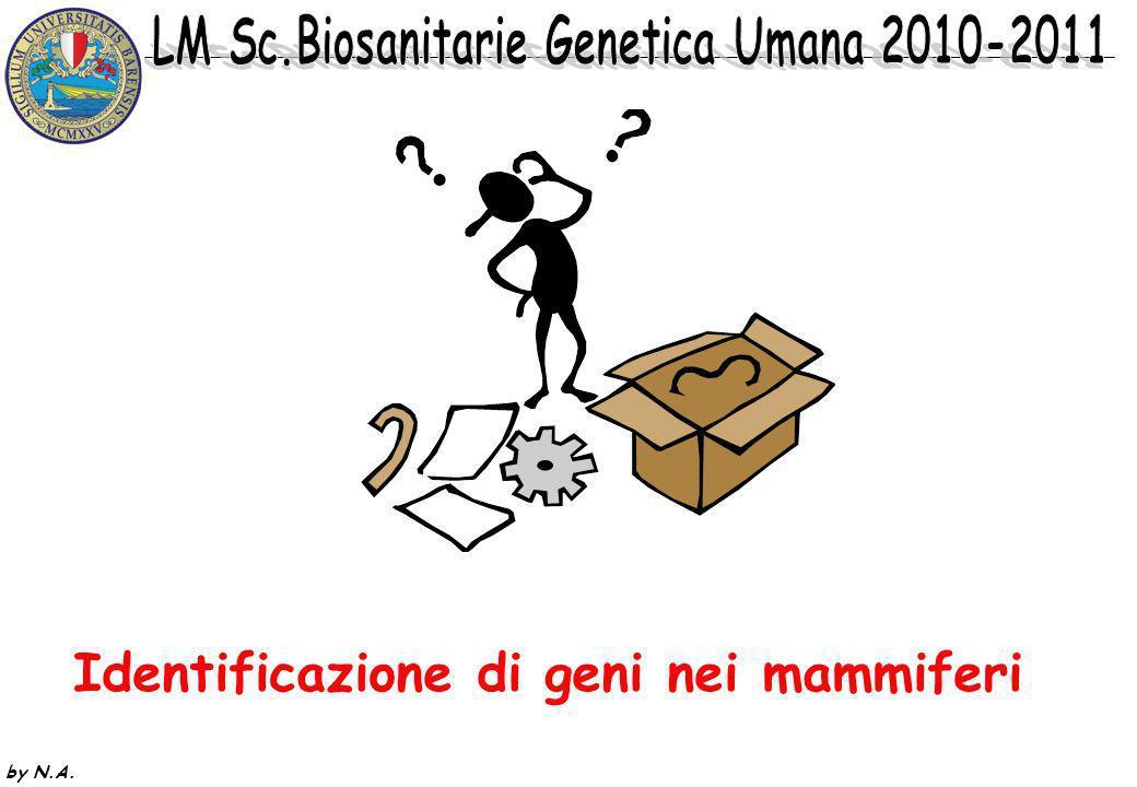 by N.A.CLONAGGIO POSIZIONALE: si conosce solo la localizzazione cromosomica del locus.