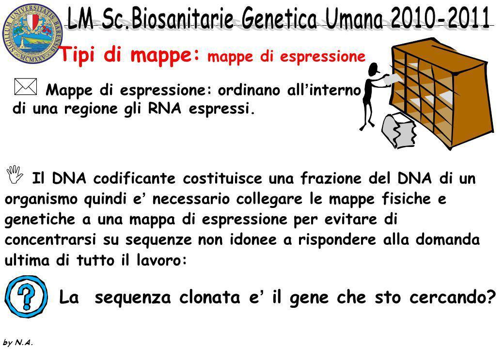 by N.A. Tipi di mappe: mappe genetiche Mappe genetiche : si basano sulla frequenza di ricombinazione fra locus identificati attraverso marcatori di va