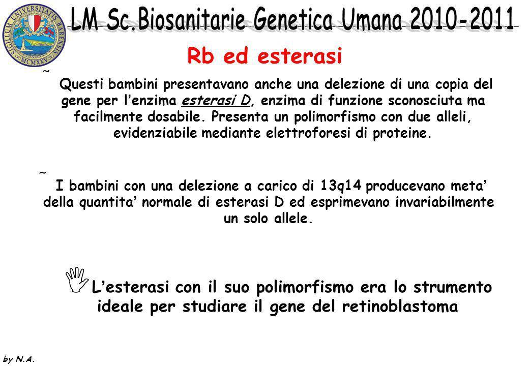 by N.A. Il primo indizio sulla posizione del gene Rb e stato fornito da soggetti rari affetti da retinoblastomi bilaterali, concomitanti anomalie cong