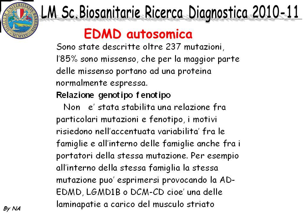 By NA EDMD autosomica