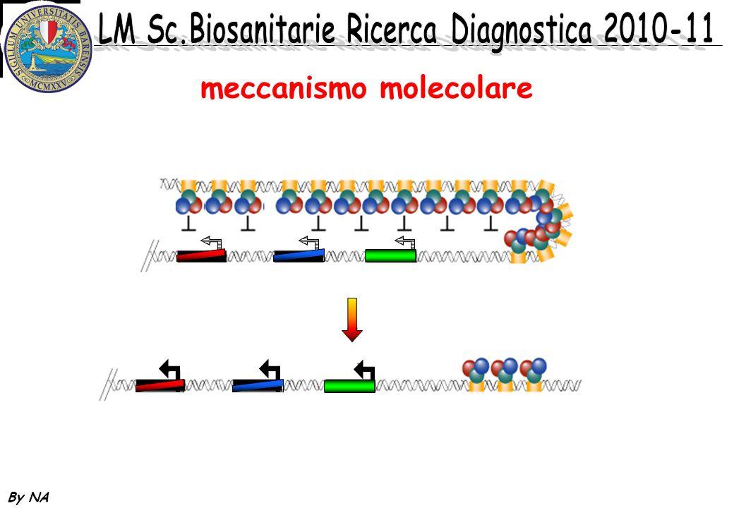 By NA meccanismo molecolare