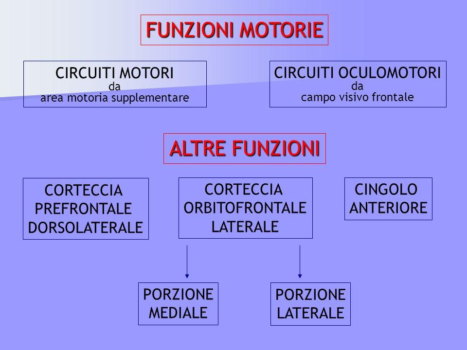 CIRCUITI MOTORI da area motoria supplementare CIRCUITI OCULOMOTORI da campo visivo frontale FUNZIONI MOTORIE ALTRE FUNZIONI CORTECCIA PREFRONTALE DORS