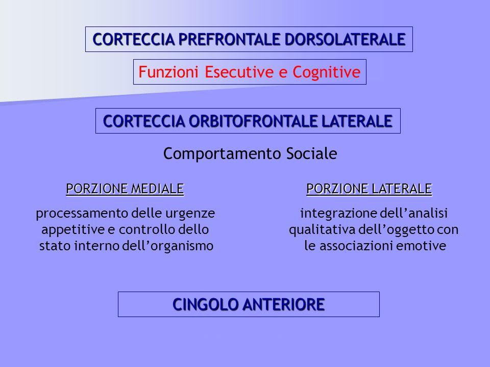 CORTECCIA PREFRONTALE DORSOLATERALE Funzioni Esecutive e Cognitive CORTECCIA ORBITOFRONTALE LATERALE Comportamento Sociale PORZIONE MEDIALE processame
