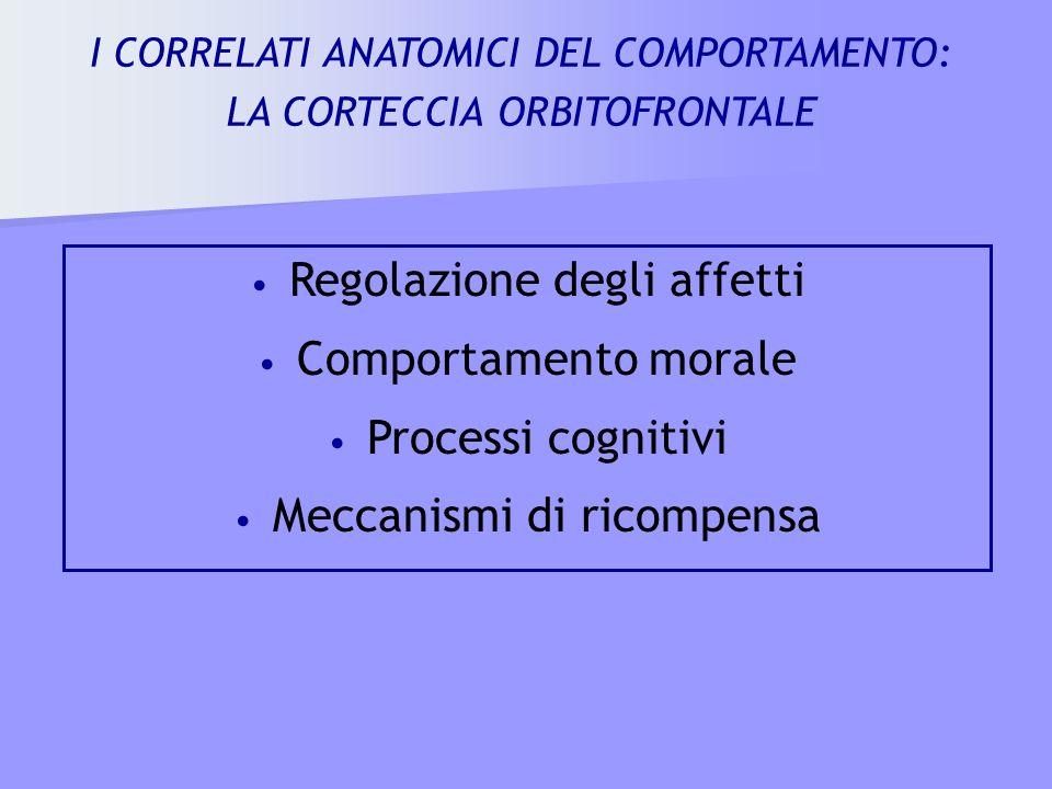 Regolazione degli affetti Comportamento morale Processi cognitivi Meccanismi di ricompensa I CORRELATI ANATOMICI DEL COMPORTAMENTO: LA CORTECCIA ORBIT