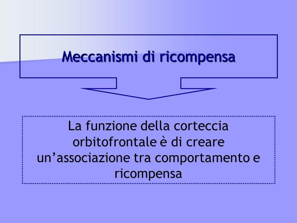 Meccanismi di ricompensa La funzione della corteccia orbitofrontale è di creare unassociazione tra comportamento e ricompensa