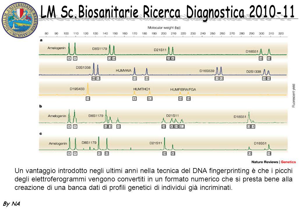 By NA Un vantaggio introdotto negli ultimi anni nella tecnica del DNA fingerprinting è che i picchi degli elettroferogrammi vengono convertiti in un f