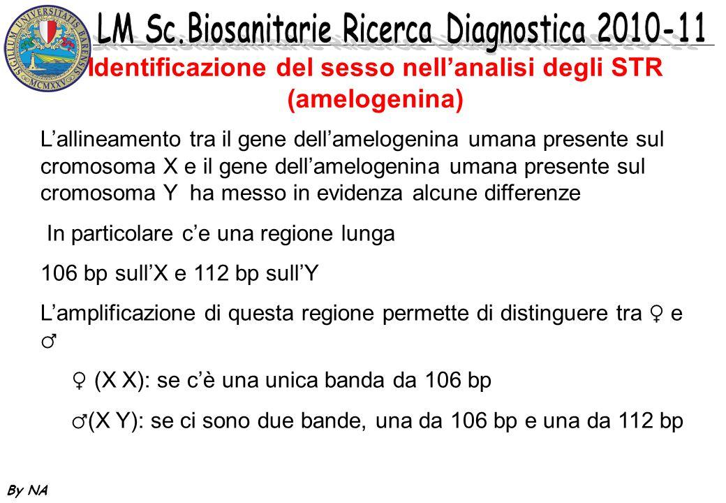 By NA Identificazione del sesso nellanalisi degli STR (amelogenina) Lallineamento tra il gene dellamelogenina umana presente sul cromosoma X e il gene