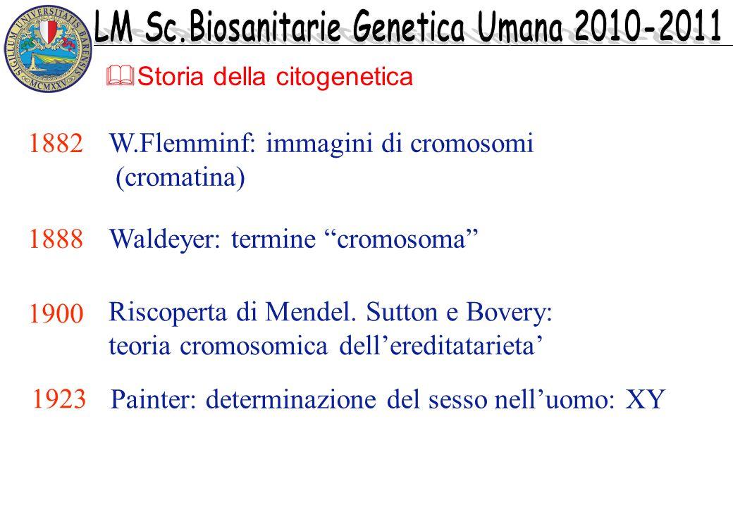 W.Flemminf: immagini di cromosomi (cromatina) 1882 1888 Waldeyer: termine cromosoma 1900 Riscoperta di Mendel. Sutton e Bovery: teoria cromosomica del