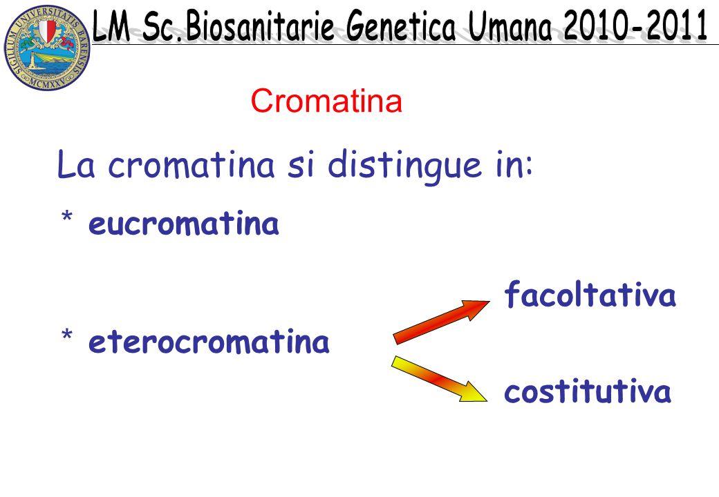 La cromatina si distingue in: * eucromatina * eterocromatina facoltativa costitutiva Cromatina