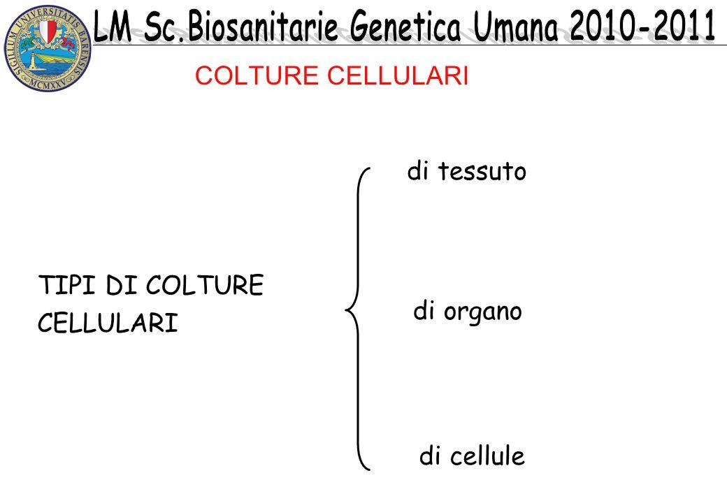TIPI DI COLTURE CELLULARI di tessuto di organo di cellule COLTURE CELLULARI