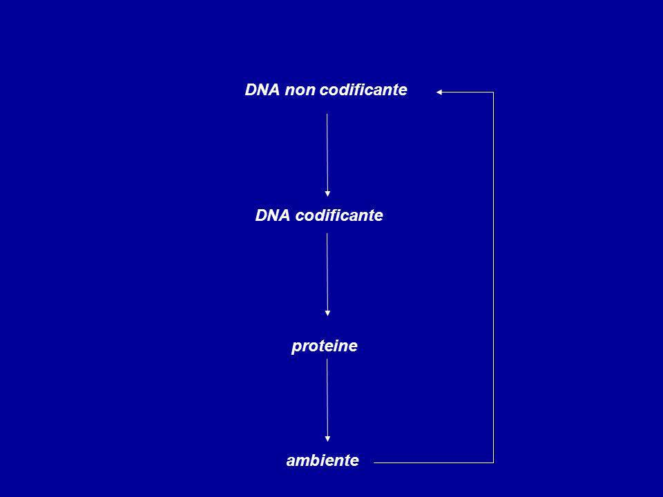 DNA non codificante DNA codificante proteine ambiente