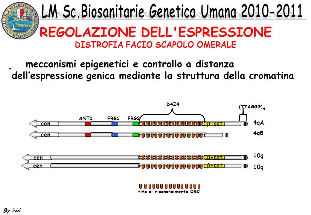 By NA * meccanismi epigenetici e controllo a distanza dellespressione genica mediante la struttura della cromatina REGOLAZIONE DELL'ESPRESSIONE DISTRO