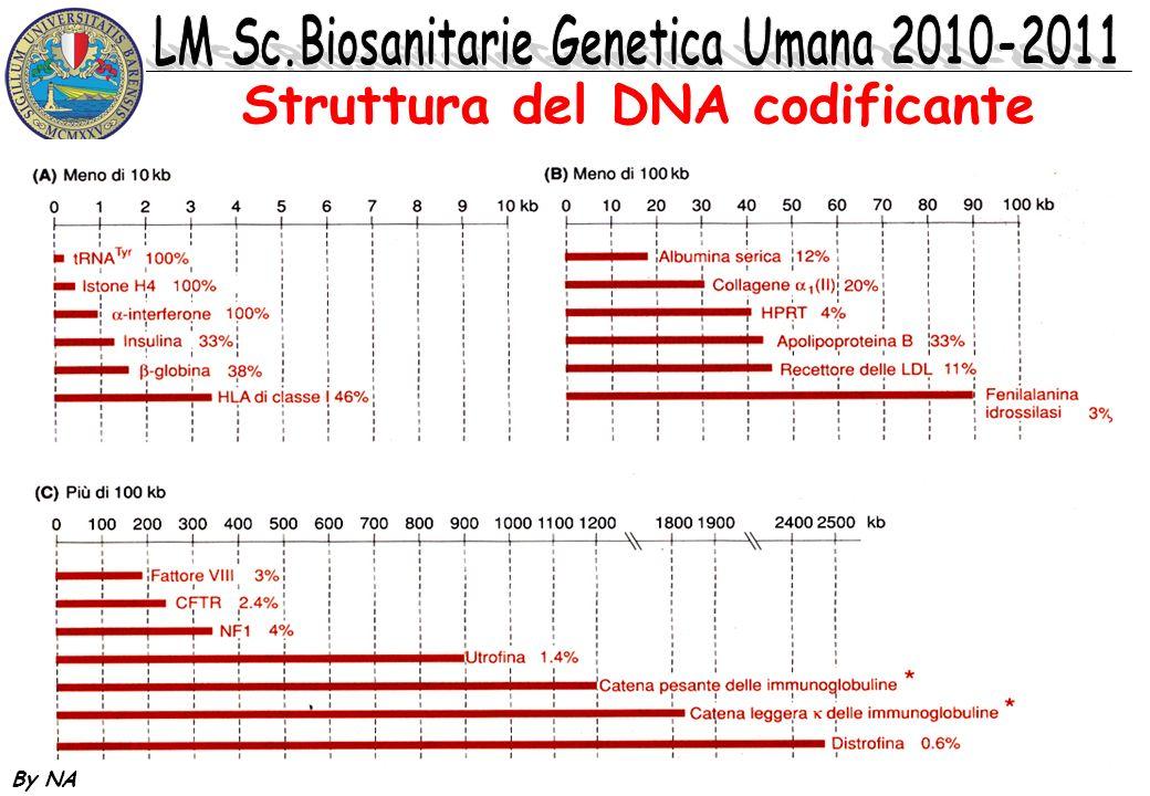 By NA Struttura del DNA codificante